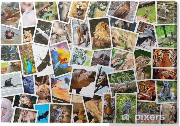 Cuadro En Lienzo Diferentes Animales Collage Pixers Vivimos - Cuadros-diferentes