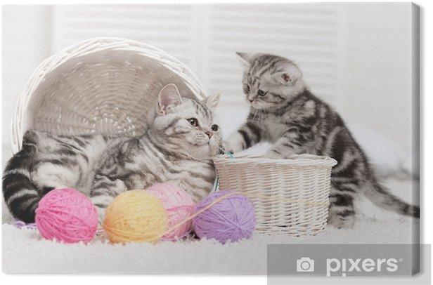 Cuadro en Lienzo Dos gatos en una canasta con bolas de hilo - Temas