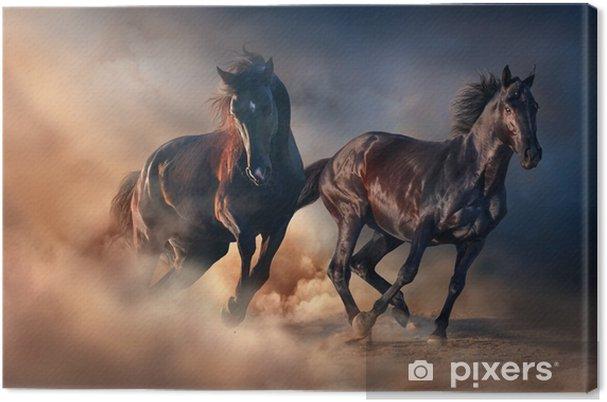 Cuadro en Lienzo Dos sementales negros corren al atardecer en el polvo del desierto - Animales