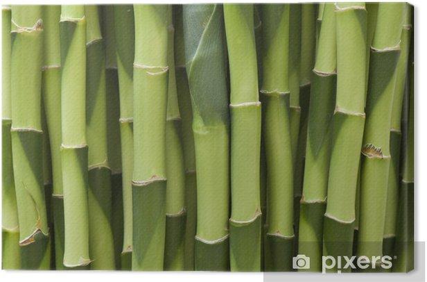 Cuadro en Lienzo Eje de patrón de planta - Plantas