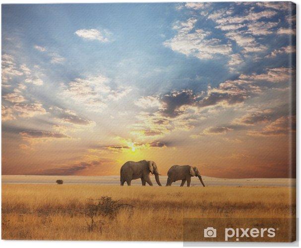 Cuadro en Lienzo Elefante - Temas