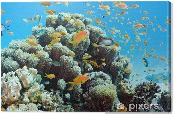 Cuadro en Lienzo Escena del filón coralino - panorama - Arrecife de coral