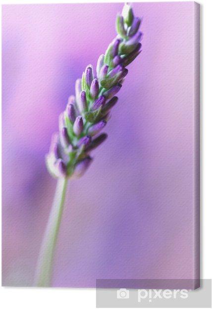 Cuadro en Lienzo Espliego - Flores