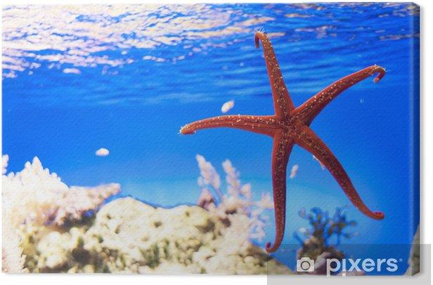 Cuadro en Lienzo Estrellas de mar en un fondo azul - Animales marinos