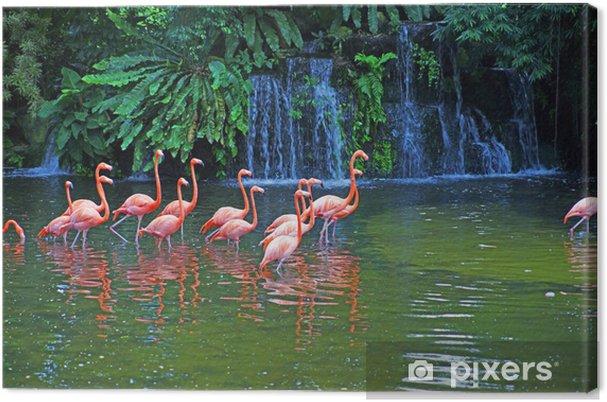 Cuadro en Lienzo Flamencos rosados en el lago con cascadas en rainorest. - Pajaros