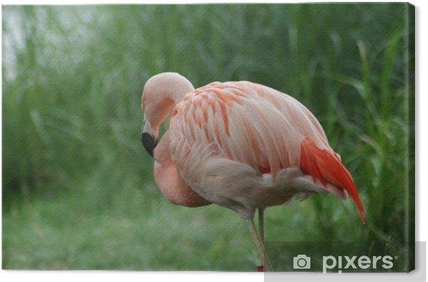 Cuadro en Lienzo Flamingo - Aves