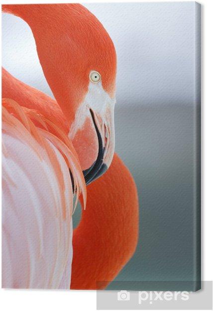 Cuadro en Lienzo Flamingo - Pajaros