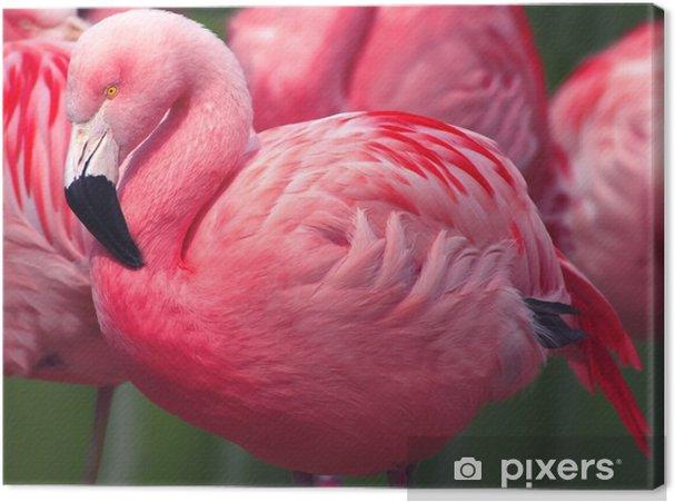 Cuadro en Lienzo Flamingos - Animales