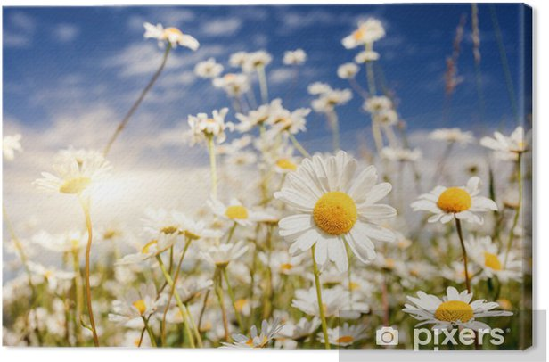 Cuadro en Lienzo Flor - Flores