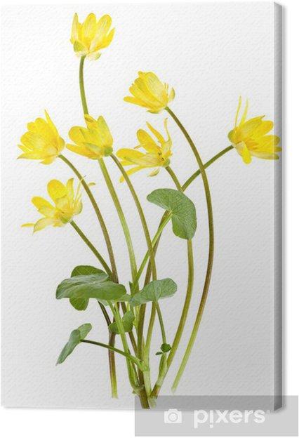 Cuadro En Lienzo Flores Amarillas Silvestres De Primavera Pixers