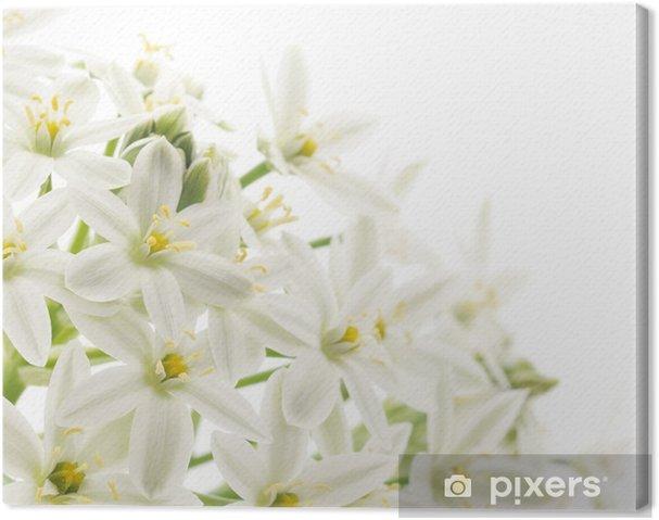 Cuadro En Lienzo Flores Blancas De Fondo Pixers Vivimos Para