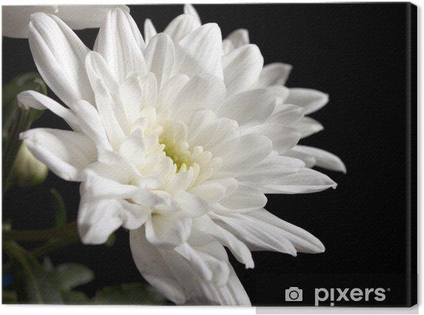 Cuadro En Lienzo Flores Blancas Hermosas Pixers Vivimos Para