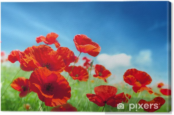 Cuadro en Lienzo Flores de amapola en campo - Temas