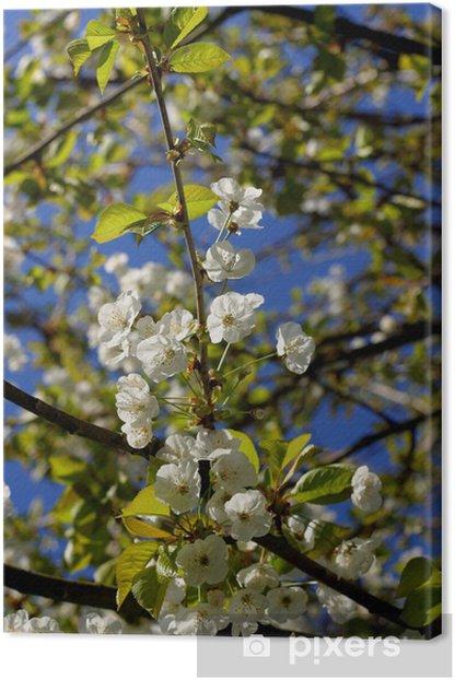 Cuadro en Lienzo Flores de Cerezo - Estaciones