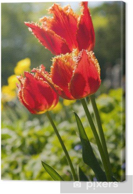 Cuadro en Lienzo Flores rojas del tulipán - Flores