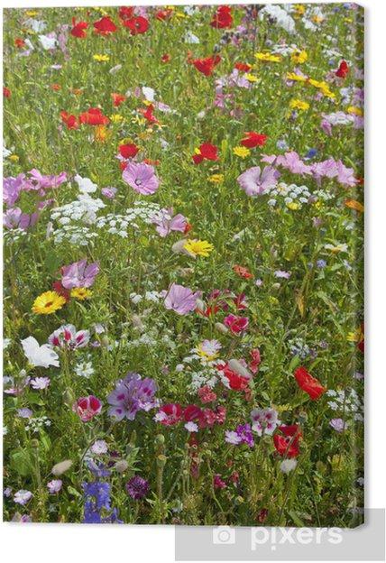 Cuadro en Lienzo Flower bed - Flores