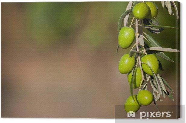 Cuadro en Lienzo Fondo con el ramo de olivo - Aceitunas