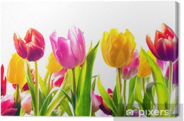 Cuadro en Lienzo Fondo vibrante de tulipanes de colores de primavera - Estaciones
