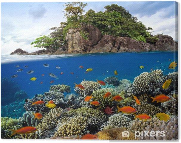 Cuadro en Lienzo Foto de una colonia de corales en un arrecife superior - Temas
