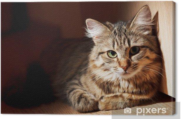 Cuadro en Lienzo Gato agradable - Temas