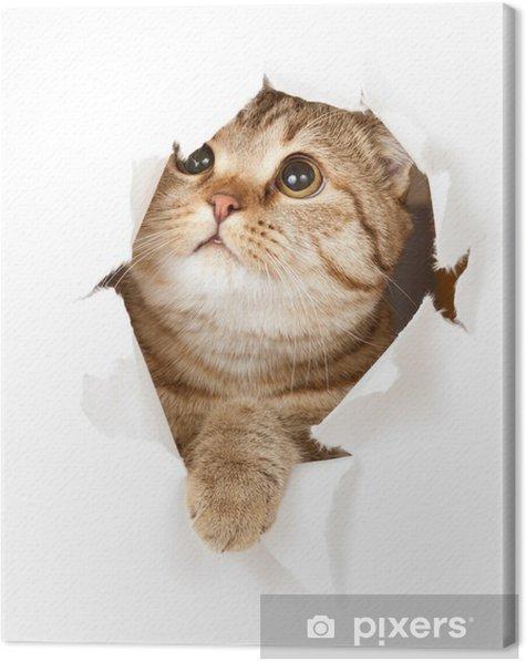 Cuadro en Lienzo Gato en el agujero de papel - Temas