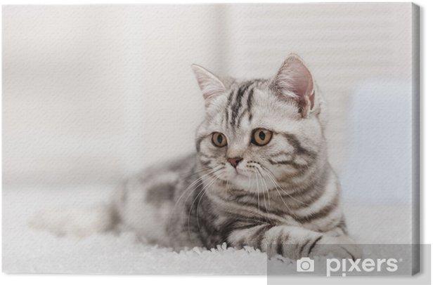 Cuadro en Lienzo Gato en la alfombra - Temas
