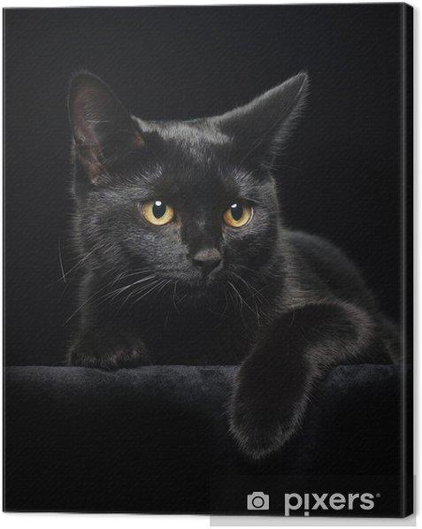 Cuadro en Lienzo Gato negro con ojos amarillos - Temas