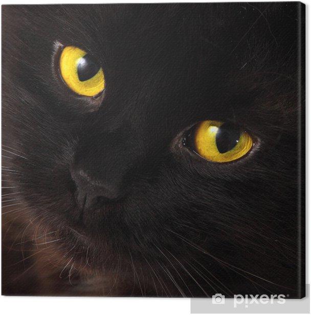 Cuadro en Lienzo Gato negro que mira a usted con ojos amarillos brillantes - Temas