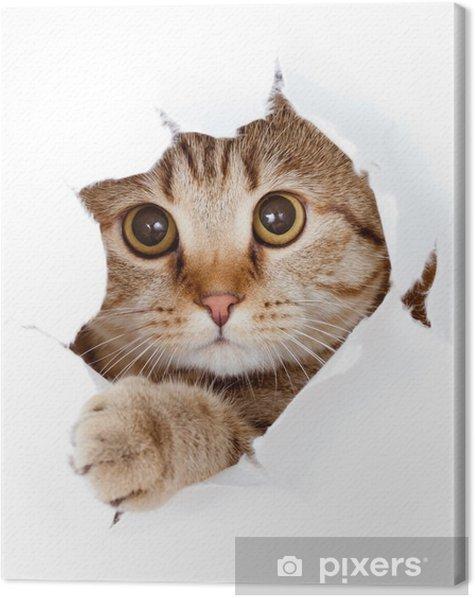 Cuadro en Lienzo Gato que mira hacia arriba en el lado del papel rasgado agujero aislado - Temas