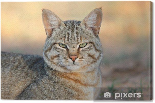 Cuadro en Lienzo Gato salvaje africano - Mamíferos