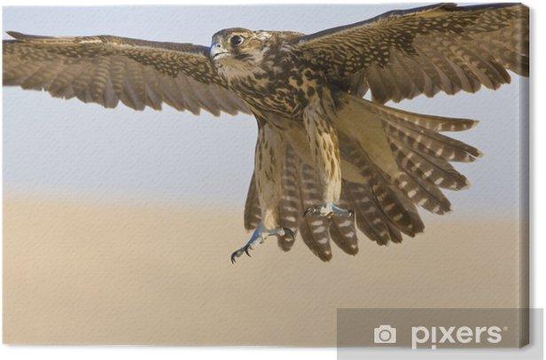 Cuadro en Lienzo Halcón en vuelo - Aves