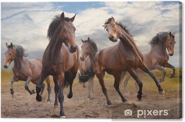 Cuadro en Lienzo Herd of horses - Caballos