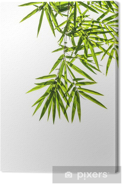 Cuadro en Lienzo Hojas del bambú aisladas sobre fondo blanco, sin recortar camino INCLUYENDO - Casa y jardín