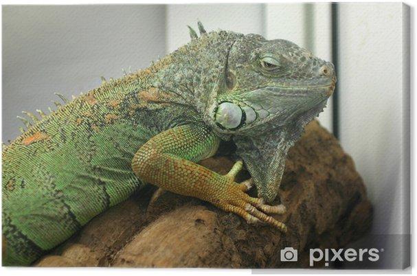 Cuadro en Lienzo Iguana verde - Temas