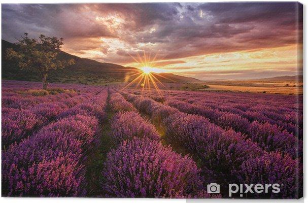 Cuadro en Lienzo Impresionante paisaje con campo de lavanda en la salida del sol -