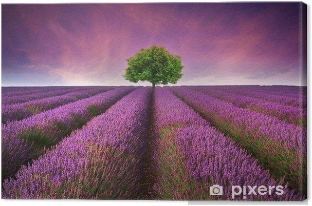 Cuadro en Lienzo Impresionante puesta de sol paisaje de campo de lavanda de verano con un solo árbol -