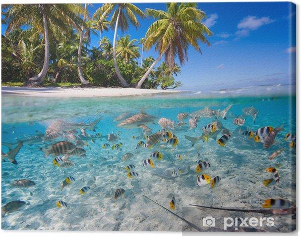Cuadro en Lienzo Isla tropical - Pescados