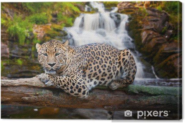 Cuadro en Lienzo Jaguar tiene un descanso contra las caídas - Mamíferos