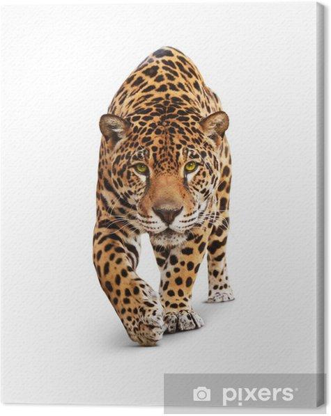 Cuadro en Lienzo Jaguar - vista frontal animales, aislados en blanco, sombra - Vinilo para pared