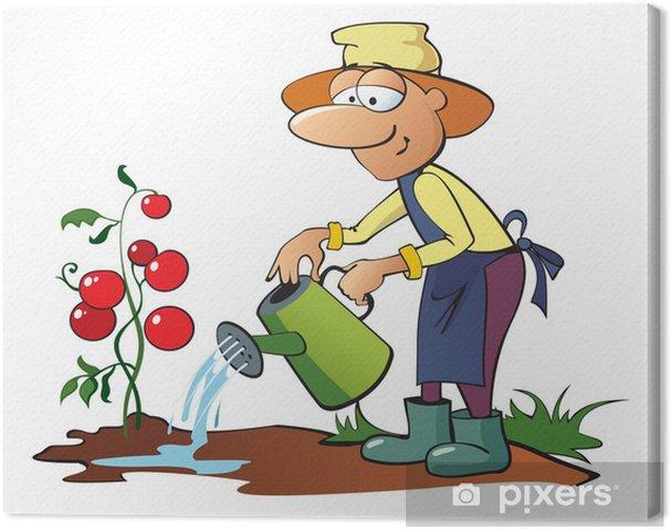 Cuadro En Lienzo Jardinero Regando Los Tomates