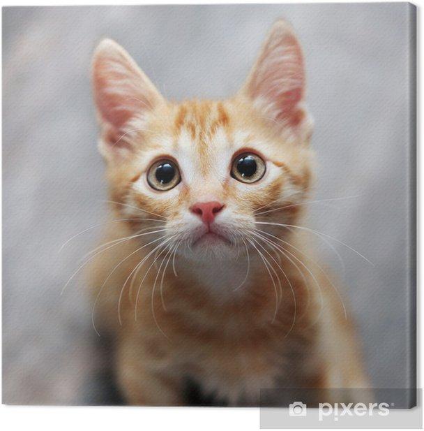 Cuadro en Lienzo Jengibre gatito -
