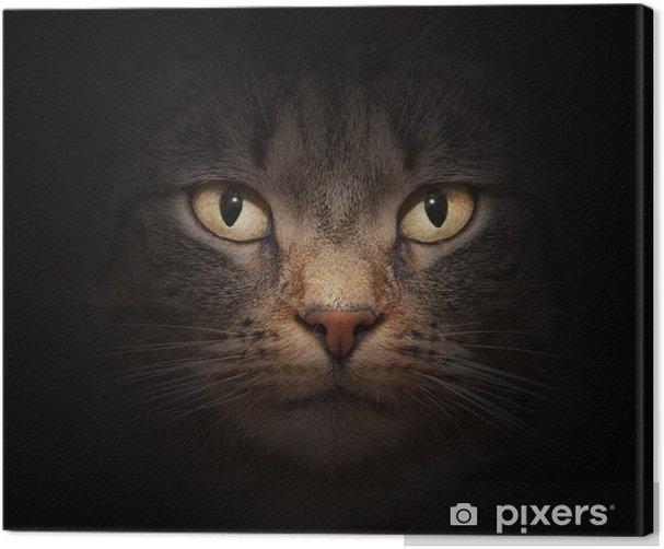 Cuadro en Lienzo La cara del gato con hermosos ojos misteriosos en negro - Temas