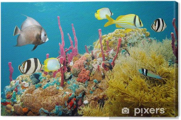 Cuadro en Lienzo La vida marina subacuática de colores en un arrecife de coral - Destinos
