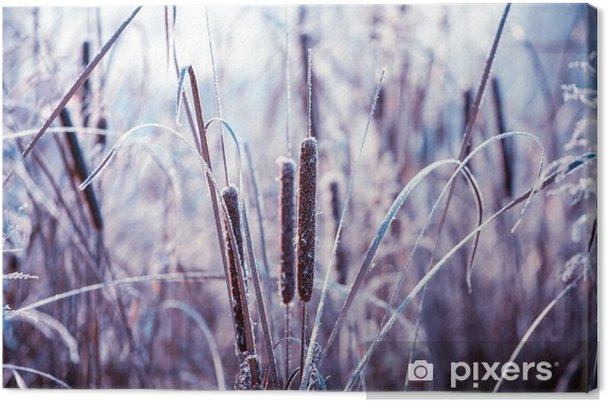 Cuadro en Lienzo Las plantas cubiertas de escarcha - Plantas y flores
