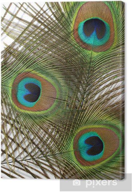 Cuadro en Lienzo Las plumas que fluyen - Texturas