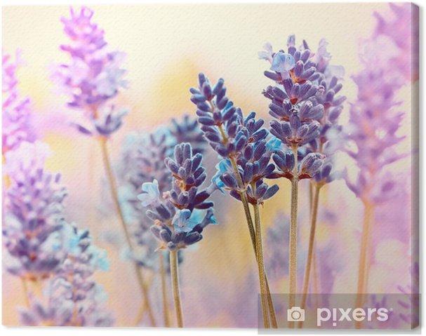Cuadro en Lienzo Lavanda hermosa - Flores