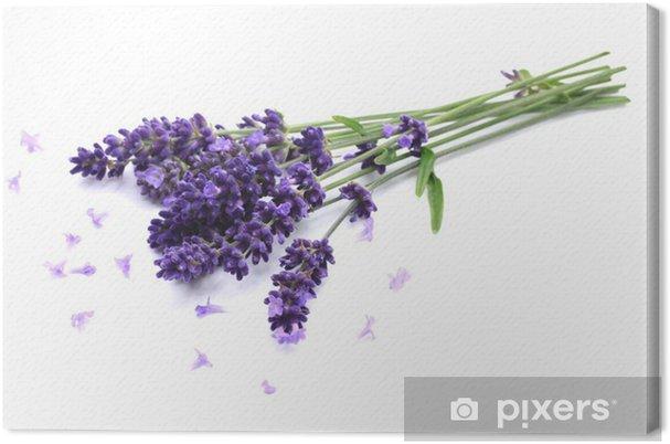 Cuadro en Lienzo Lavendel - Salud y medicina