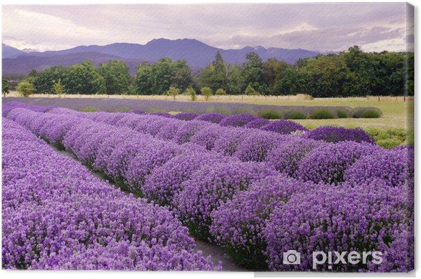 Cuadro en Lienzo Lavender Farm en Sequim, Washington, EE.UU. - Temas