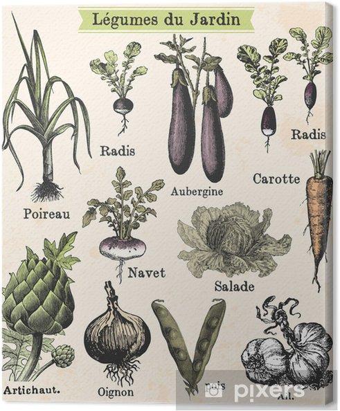 Cuadro en Lienzo Legumes du jardin - Estilos