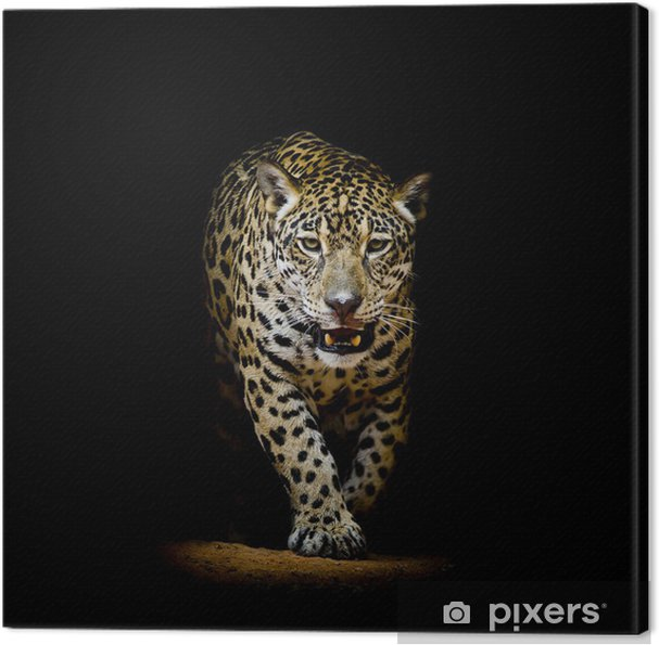 Cuadro en Lienzo Leopard retrato - Fondos